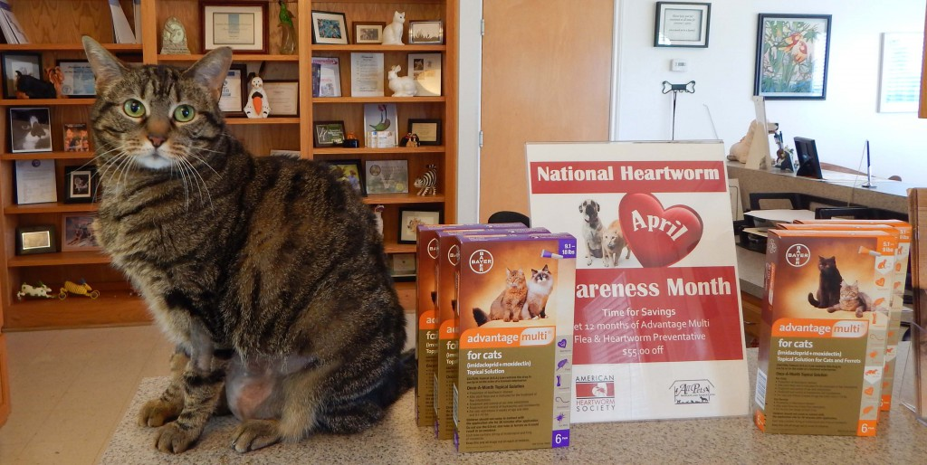 Veterinary heartworm prevention promotion in College Station, Texas.