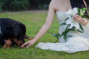 pet wedding photo