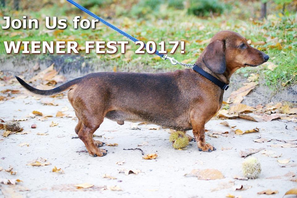 Wiener Fest 2017