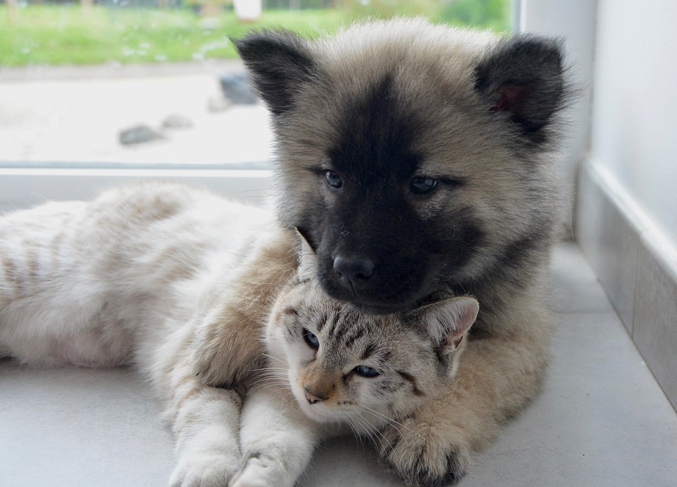 Pet Poison Prevention Month