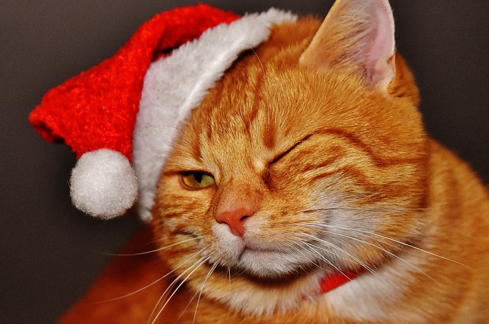 Stress-Free Holidays for Your Pets